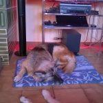 Urlaubshund Sari schläft entspannt vor dem Fernseher